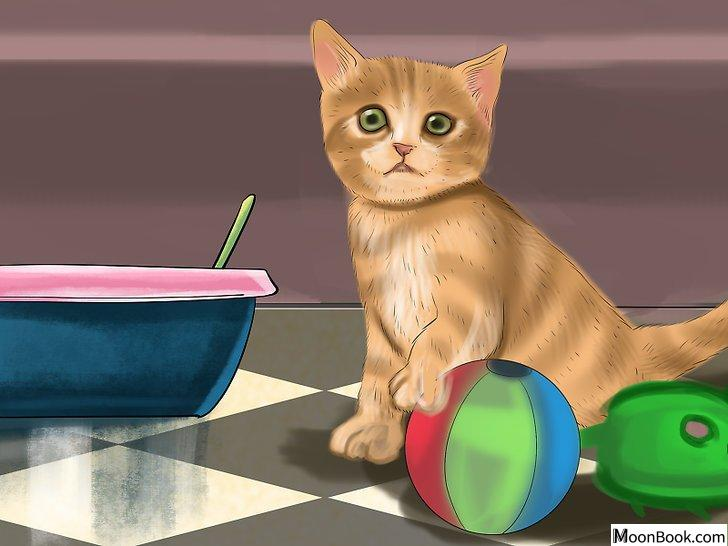 以Retrain a Cat to Use the Litter Box Step 2为标题的图片