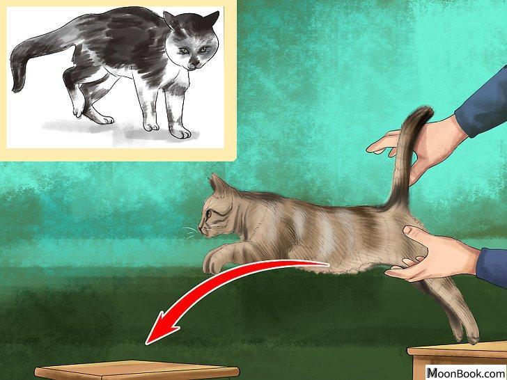 以Retrain a Cat to Use the Litter Box Step 20为标题的图片
