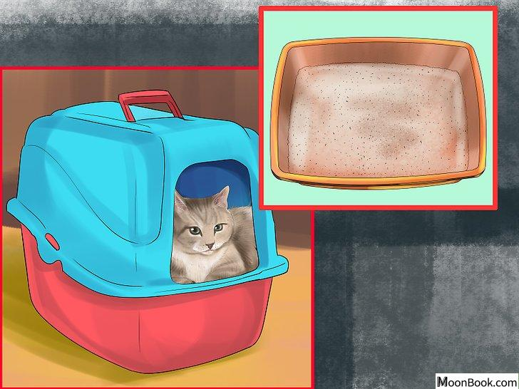 以Retrain a Cat to Use the Litter Box Step 4为标题的图片