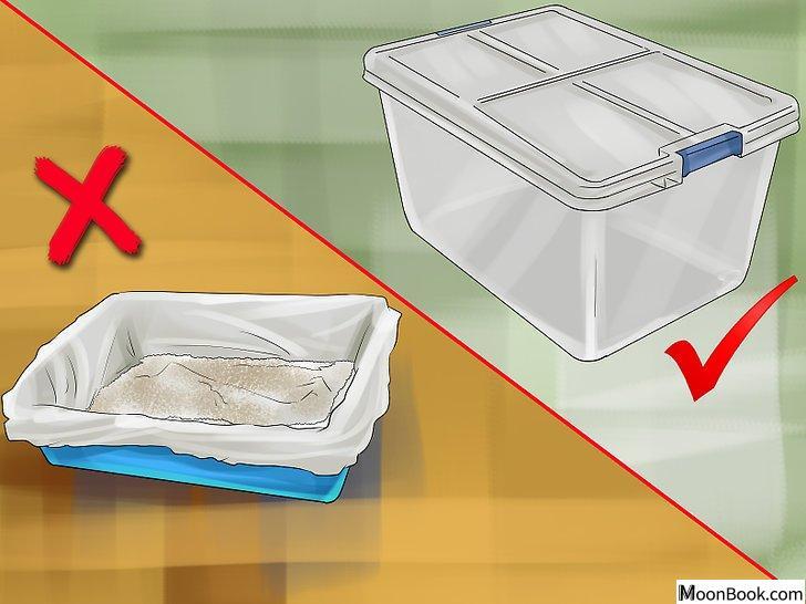 以Retrain a Cat to Use the Litter Box Step 5为标题的图片