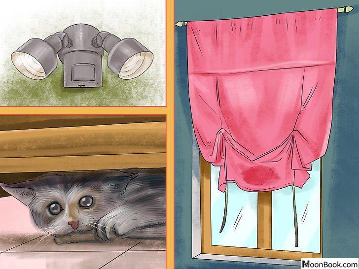以Retrain a Cat to Use the Litter Box Step 7为标题的图片