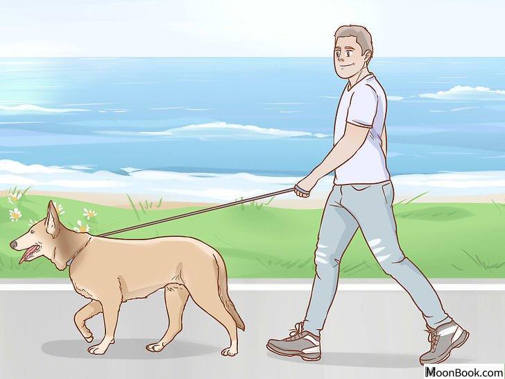 以Shrink Tumors in Dogs Step 5为标题的图片