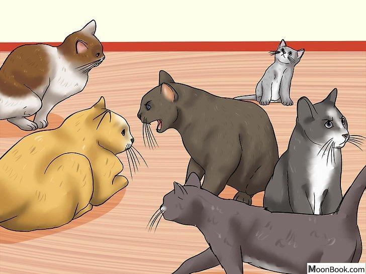 以Spot the Signs of Cat Abuse Step 1为标题的图片