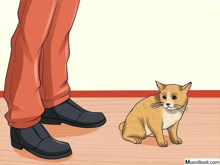 以Spot the Signs of Cat Abuse Step 11为标题的图片