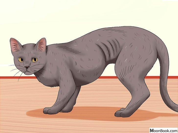 以Spot the Signs of Cat Abuse Step 6为标题的图片