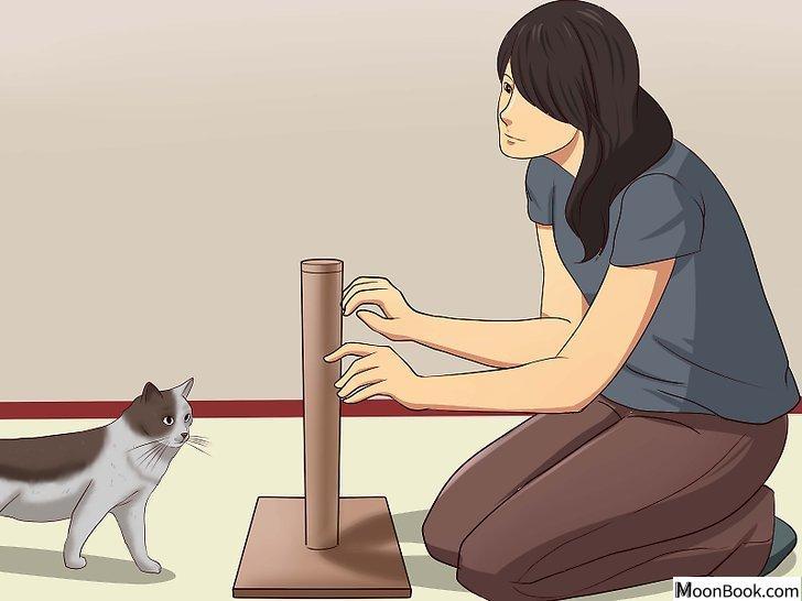 以Stop a Cat from Clawing Furniture Step 5为标题的图片