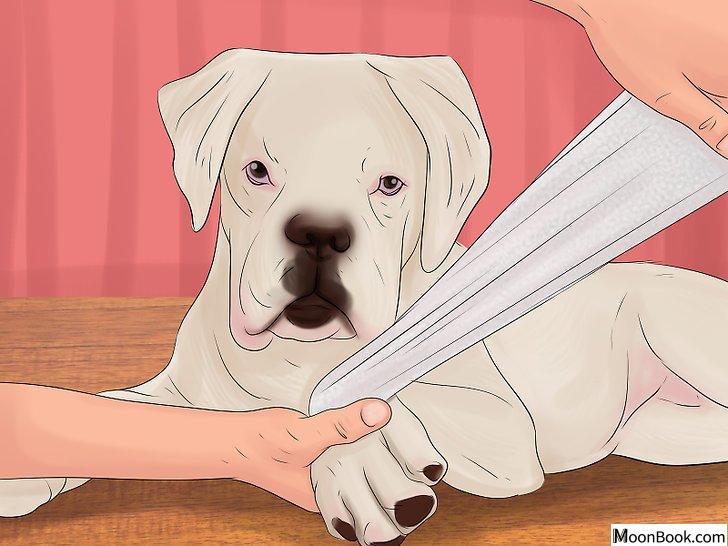 以Stop a Dog