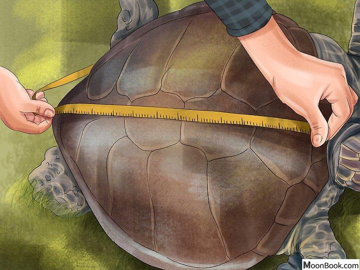 以Tell a Turtle