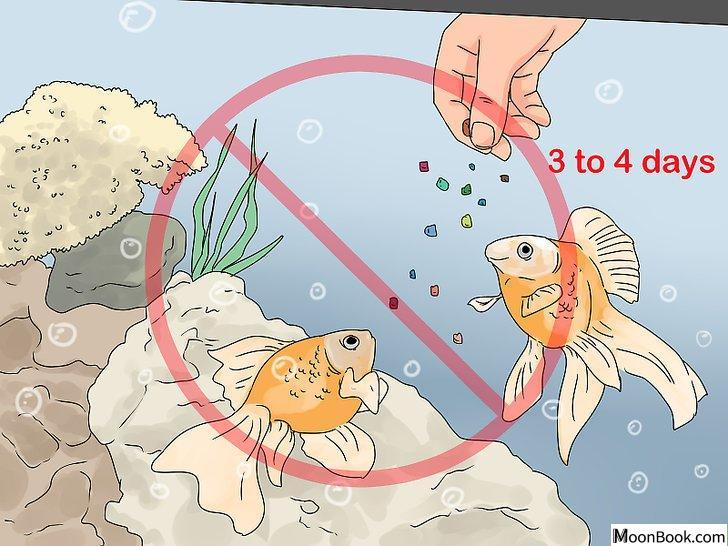 以Tell if Your Fish Is Dead Step 10为标题的图片