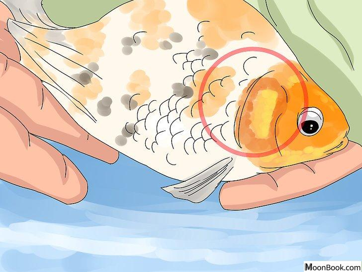 以Tell if Your Fish Is Dead Step 2为标题的图片