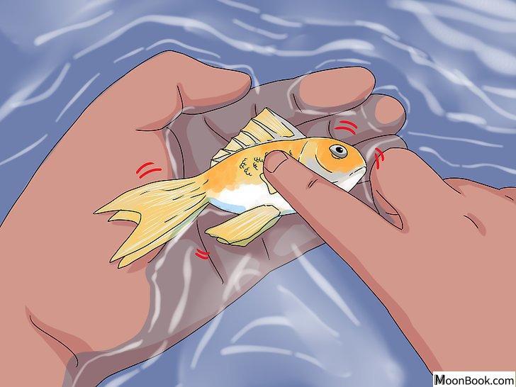 以Tell if Your Fish Is Dead Step 4为标题的图片