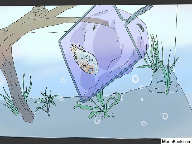 以Tell if Your Fish Is Dead Step 7为标题的图片