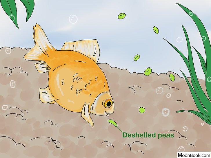 以Tell if Your Fish Is Dead Step 9为标题的图片