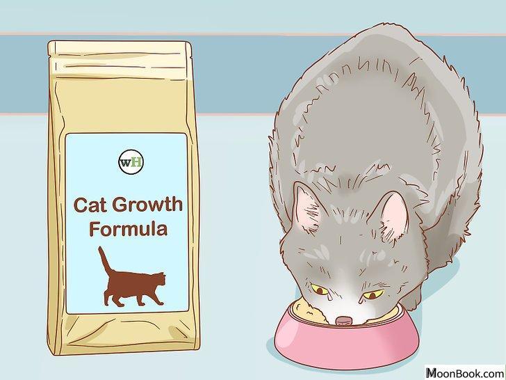 以Tell if a Cat is Pregnant Step 11为标题的图片
