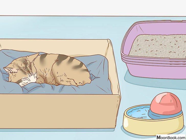 以Tell if a Cat is Pregnant Step 12为标题的图片
