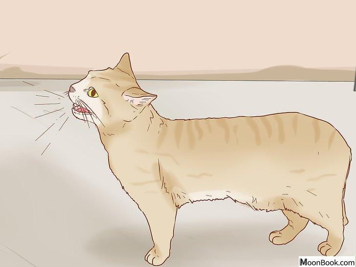 以Tell if a Cat is Pregnant Step 2为标题的图片