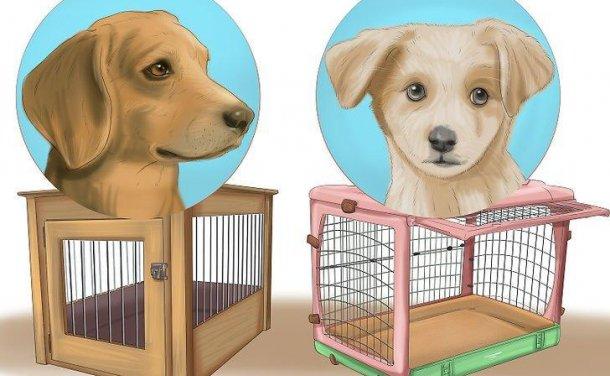 如何 进行狗笼训练