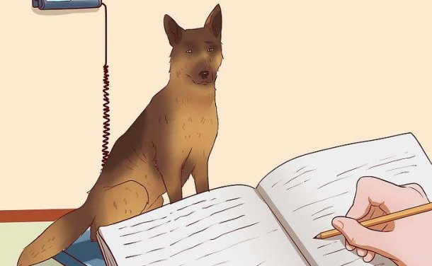 如何 让狗狗保持健康体重