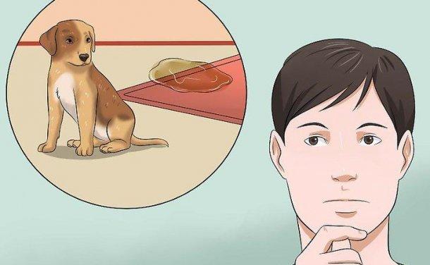 如何在家训练小狗