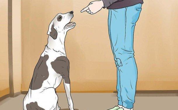 如何惩罚狗狗