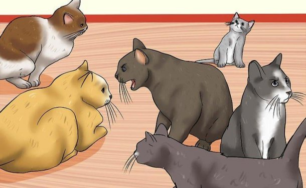 如何辨认猫咪受虐的迹象