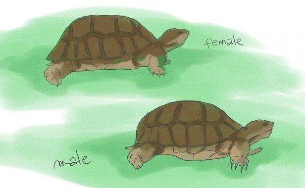 如何繁殖海龟