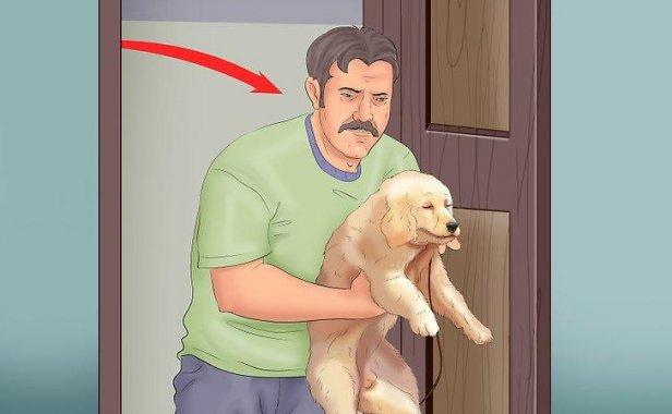如何在公寓中训练小狗如厕