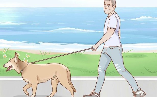 如何训练狗到固定地方大小便