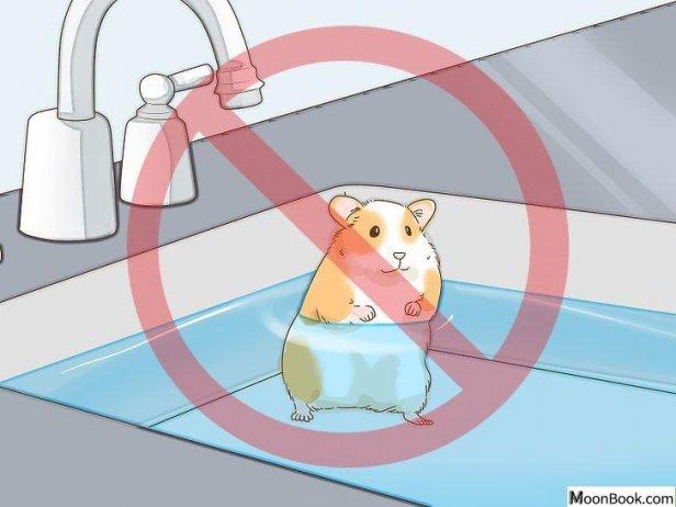 如何给仓鼠洗澡