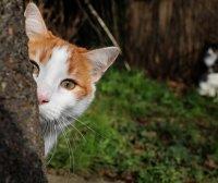 为什么我们觉得狗忠诚,猫冷漠自私?